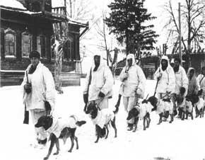 patroli infantri rusia dengan anjingnya dalam kamuflase salju. anjing-anjing ini dilatih membawa peledak dan untuk menyerbu tank Jerman